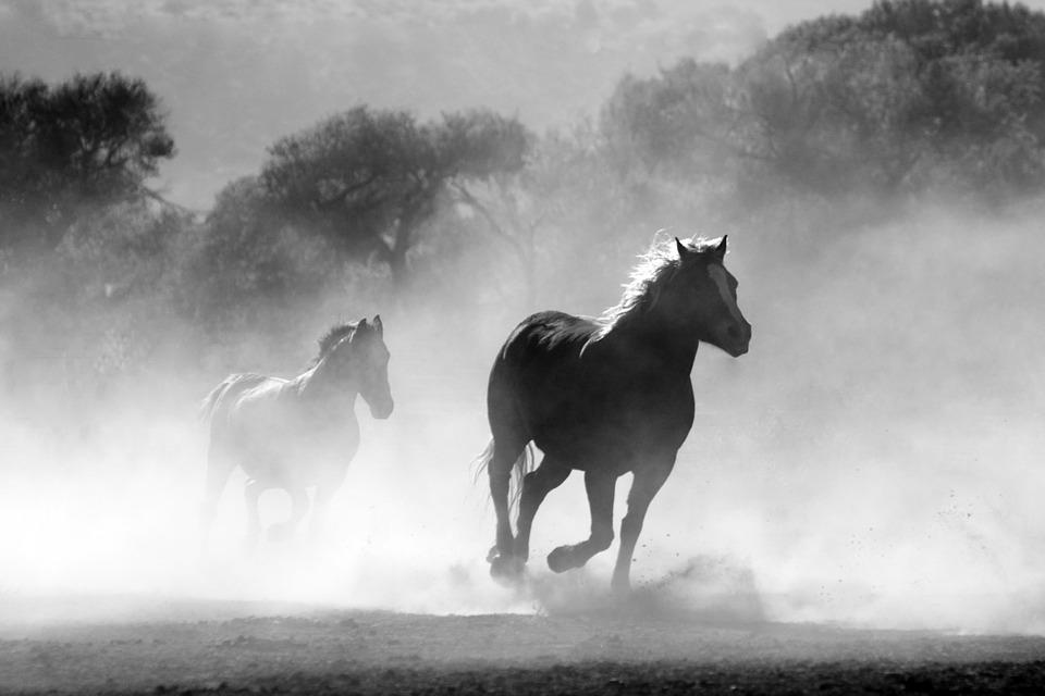 Des chevaux au copywriting en passant par l'entrepreneuriat